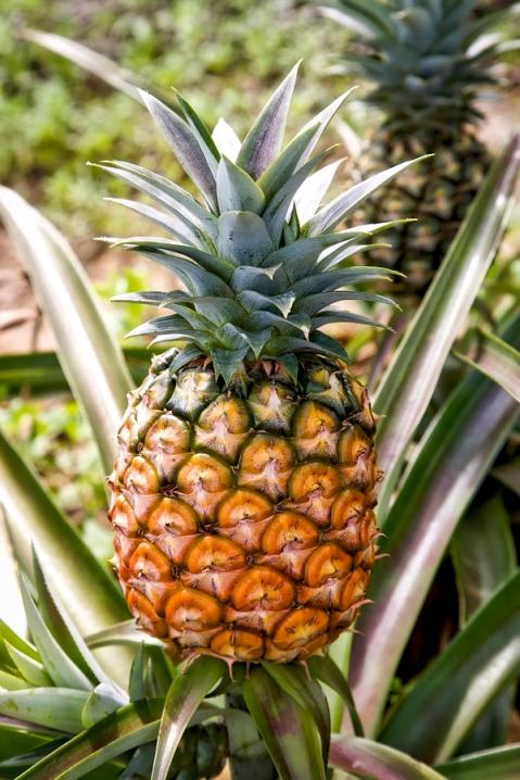 ananas1_HDR